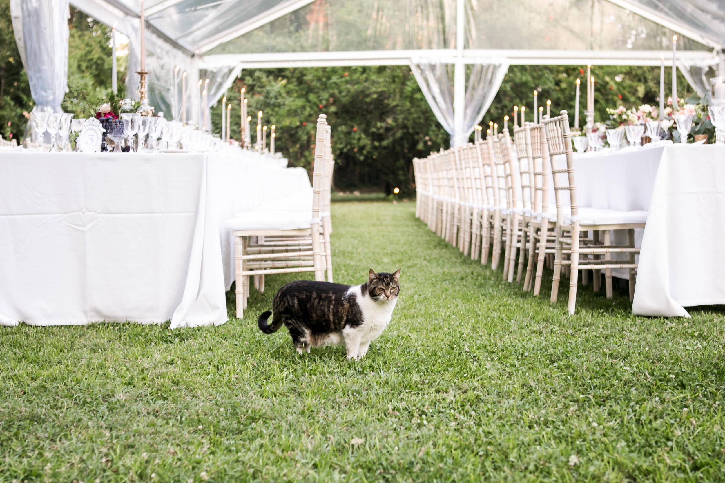 matrimonio_villa-ferrari-gussola_MI-095